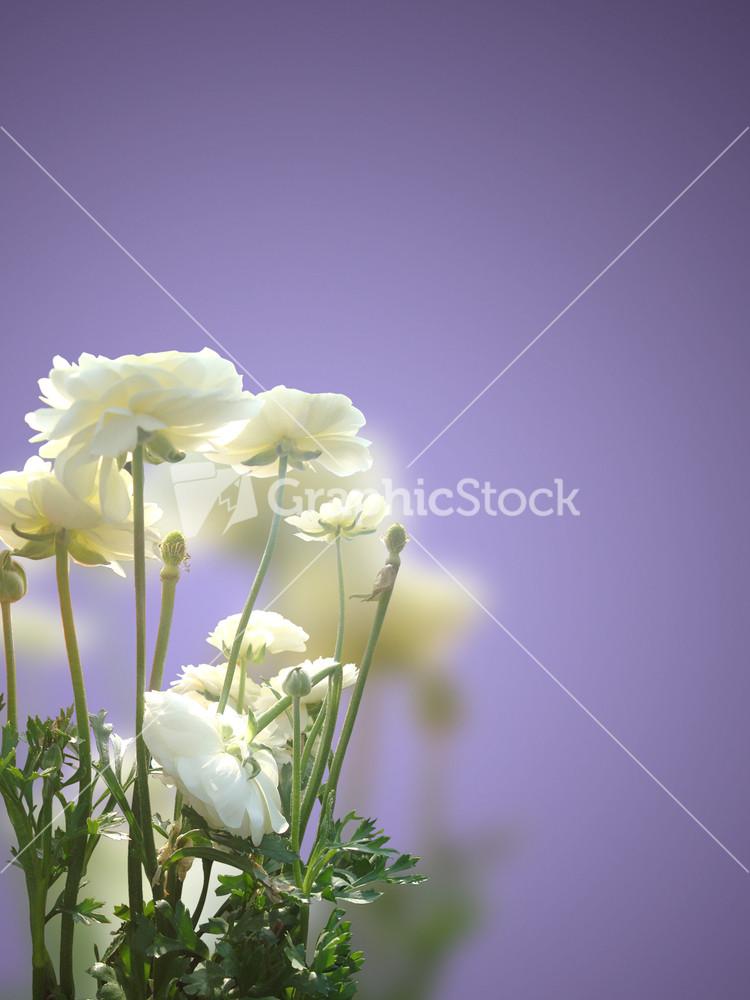 Anniversary flowers stock image