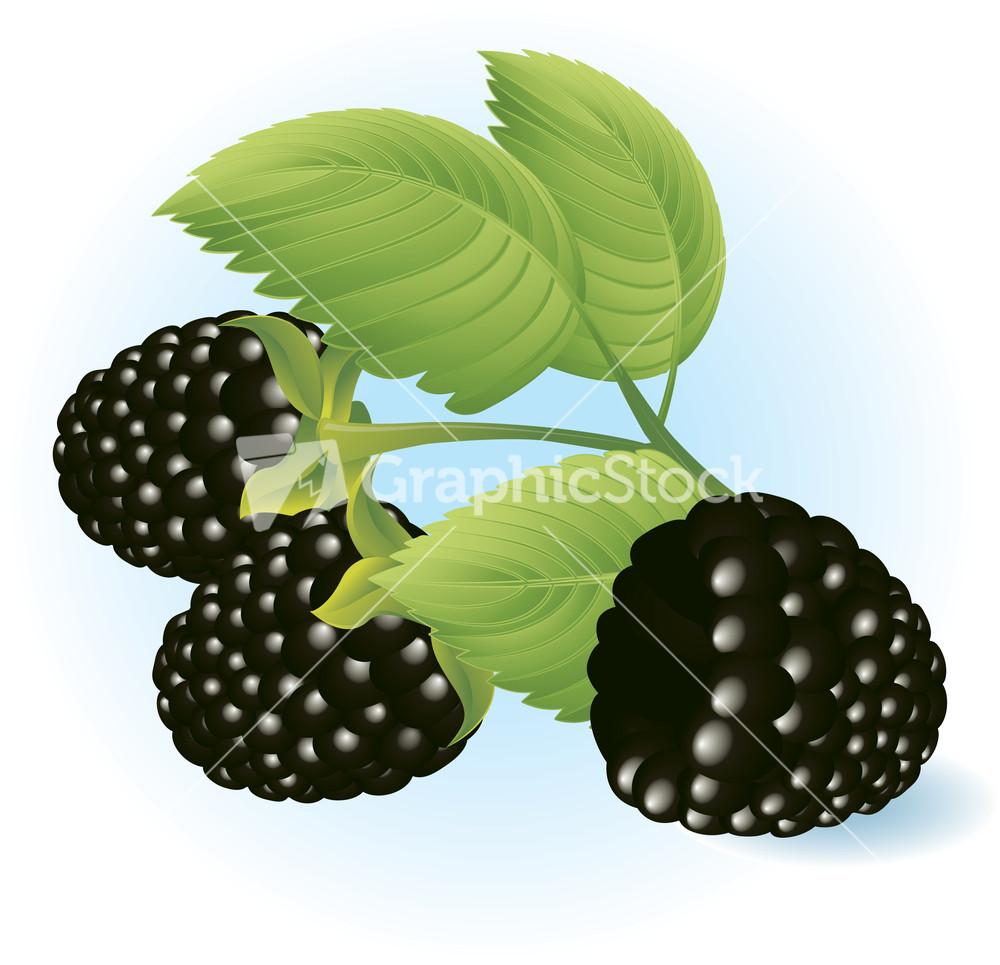 Stock options blackberry