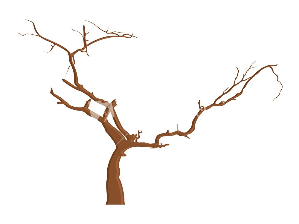 Dead Tree Branches Drawing Stock Image