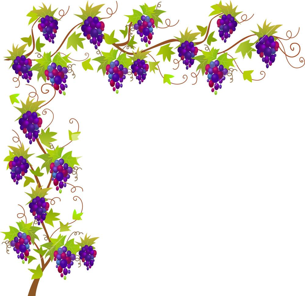 Grapevine Vector Border Stock Image