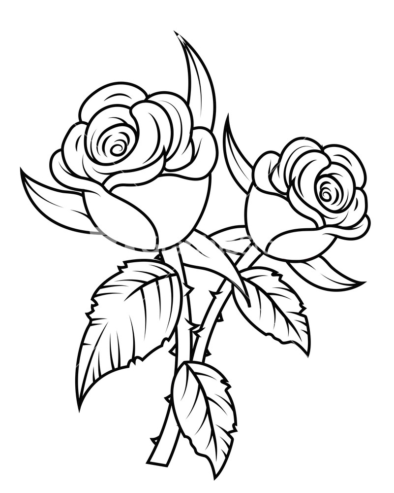 clipart roses black and white - photo #30