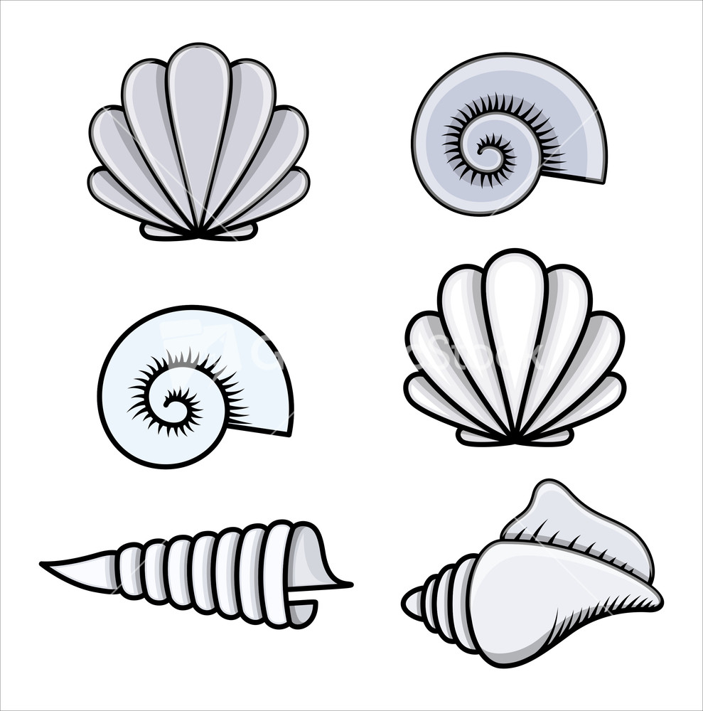 Seashells - Cartoon Vector Illustration Stock Image