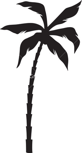 Palm Tree Royalty-Free Vectors, Illustrations and Photos