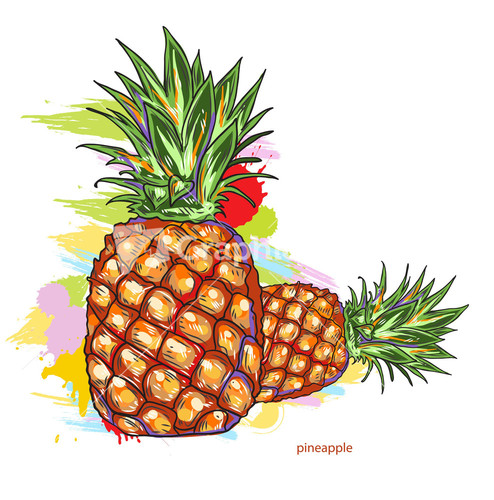 Pineapple. Vector Illustration Stock Image