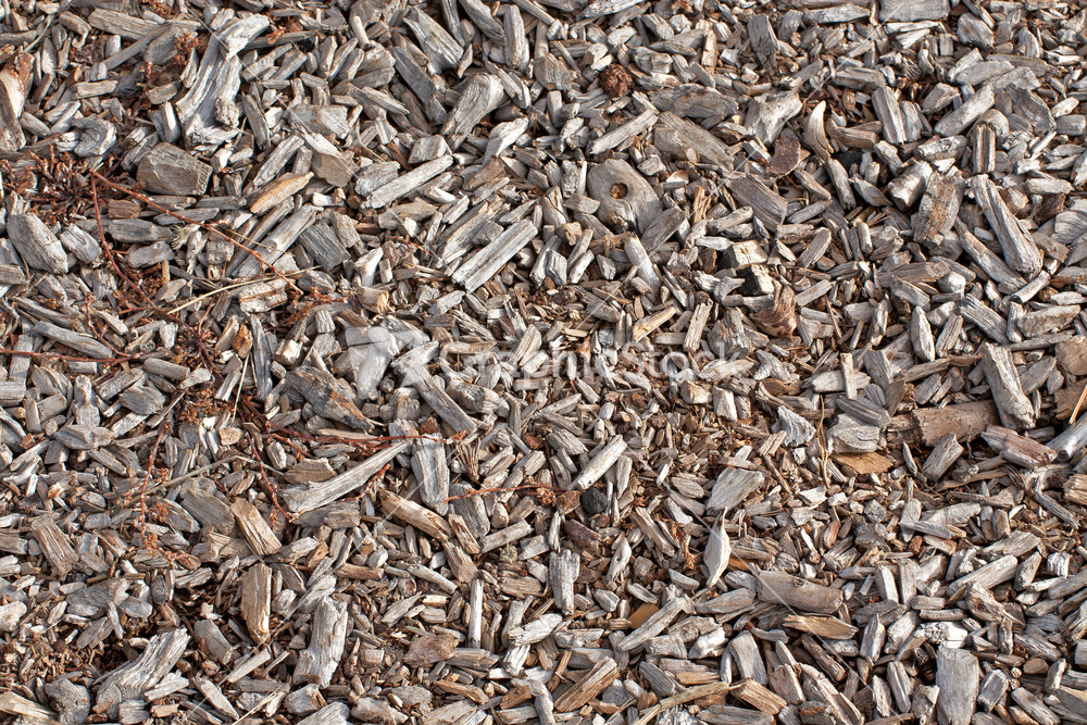 Dirty Wood Chips ~ Wood chips stock image