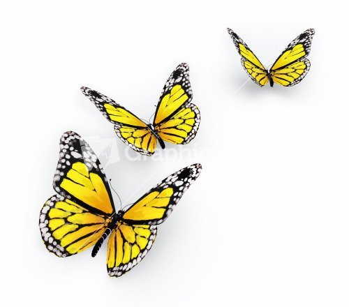 Group of Yellow Butterflies Stock Image