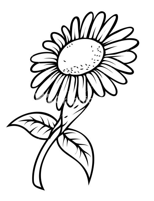 Line Drawing Sunflower Tattoo : Simple sun flower drawing pictures to pin on pinterest