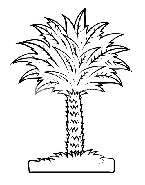 how to draw rounded palm tree leaves