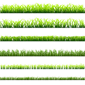 6 différents types de Green Grass