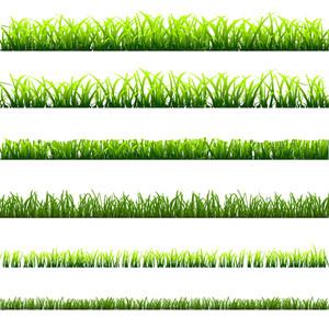 6 tipos diferentes de hierba verde