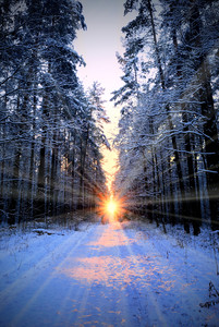 Sun Rays In Winter Forest