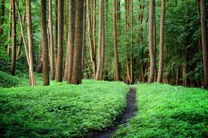 산림 도로 현장