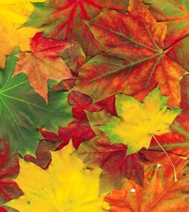 아름다운 가을 단풍 배경 잎