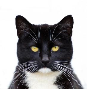 블랙 턱시도 고양이 (144)