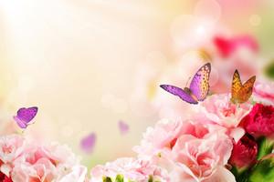 꽃에 나비