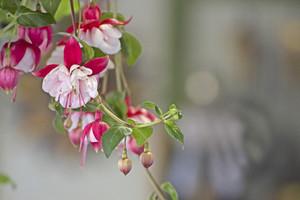 꽃 나뭇 가지