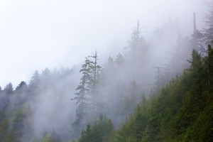 Fog On Mountain Forest