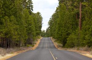 Forest Highway
