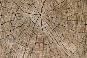 나무 그루터기 9 질감